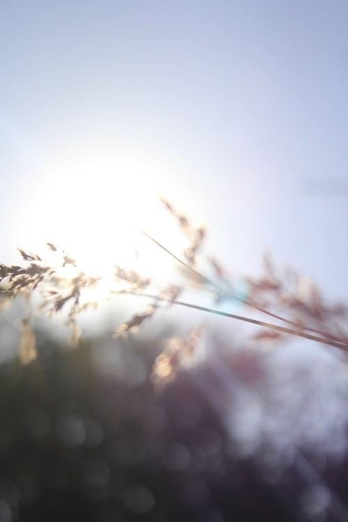 這是在五云山山腰上拍的一組照片。照片中雖然沒有豐富的風景,但是柔和的光線和淡淡的色調依然讓這組照片充滿意境,我們可以學習一下如何拍一些細節的美,找到不同以往的拍攝角度,并且充分利用光線,就能拍出一些唯美清新的意境照片了。一起來學習一下吧。