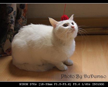 小猫玩球图片_组图:可爱昭猫猫玩毛线球(4)_新浪生活_新浪网