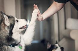 单身养狗死亡风险降低33%