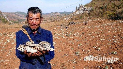 全国近7千万亩耕地受旱 旱情仍呈发展