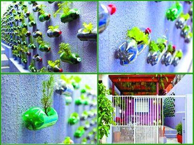 可乐瓶种菜图片幼儿园