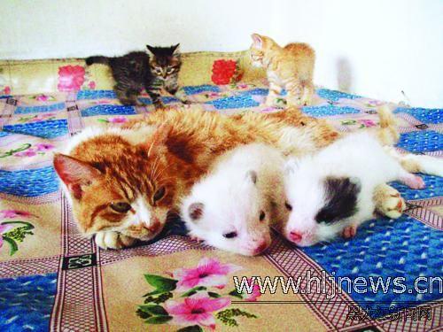 小色狗和猫交配_美女小嫩屄和大黄狗交配_7262图片网