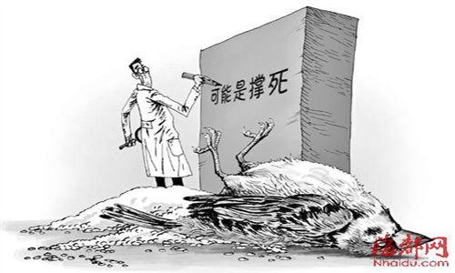 """麻雀抢食大米死亡_邓海建:""""麻雀之死""""悬疑剧还要演几季? 麻雀 大米 悬疑剧 ..."""