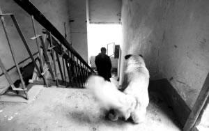 宠物狗不愿搬家独守拆迁房半年(图)