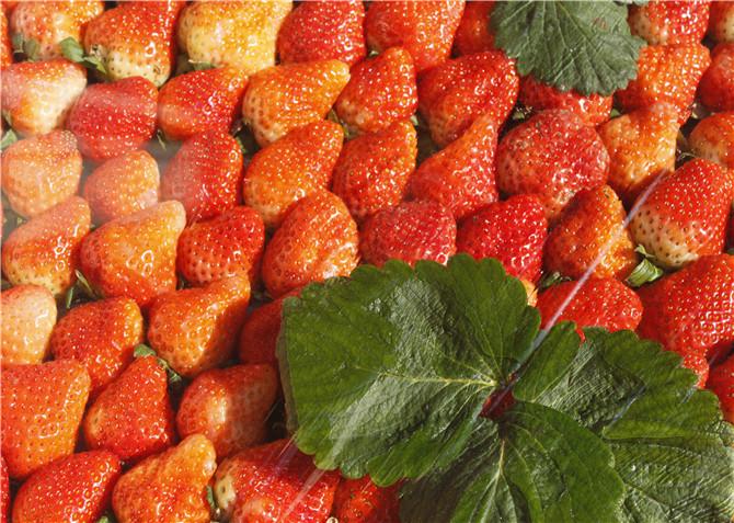 過年必備小零食 水果類