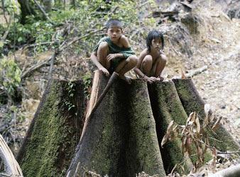 亚马孙热带雨林_盗砍每天毁坏51万平方公里印尼热带雨林_新闻中心_新浪网