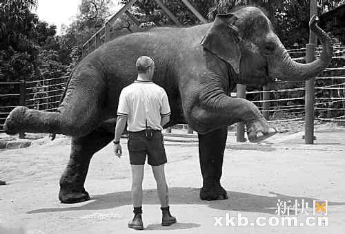 少妇酒店操逼15p_德国大象做孕妇操
