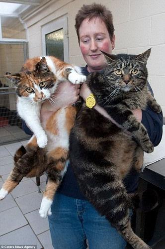 英国2只肥猫在主人去世后靠消耗脂肪存活1个月 肥猫 脂肪 存活 新浪新闻