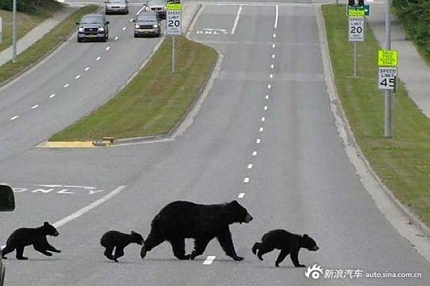 哪里有欧美幼幼资源_任性动物霸占马路导致交通中断 海象趴路中央