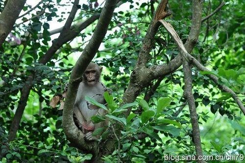 抢游客太阳镜的猴儿
