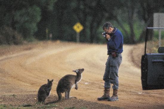 avtt天堂人与动物_南澳袋鼠岛:陶醉在动物与自然的天堂(2)_新浪旅游_新浪网