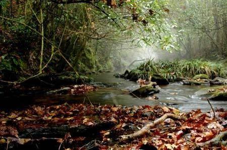夏末初秋到得天獨厚的銅鑼壩國家森林公園走走吧