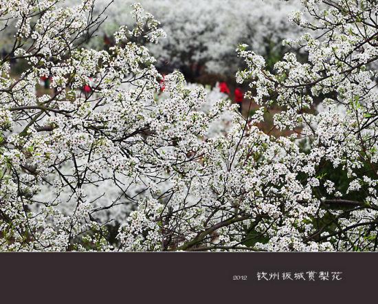浓密花间 图片来源:一曲彩虹 新浪博客