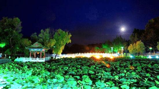 寻找满月_夏日夜游趣 寻找最美的荷塘月色_新浪旅游_新浪网