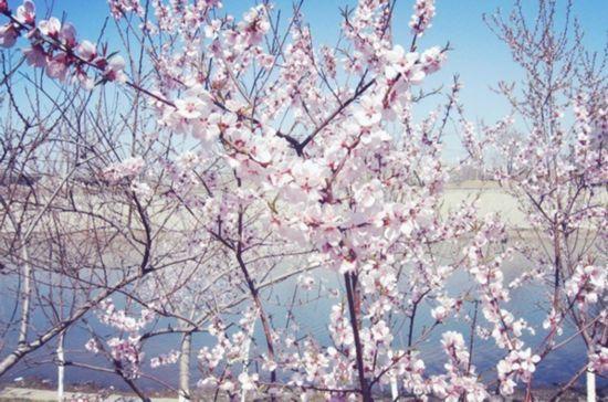 天津市桃花堤在哪_正是春游好时节 津城最美赏春地(3)_新浪旅游_新浪网