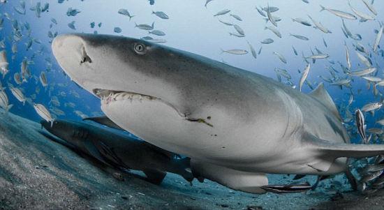 孩子被鲨鱼咬断肢体_美国摄影师海底近距离拍鲨鱼张嘴进食瞬间